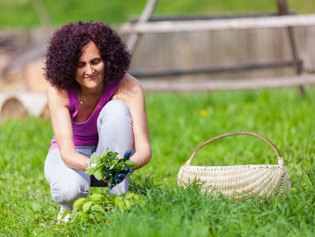 Целебные свойства крапивы для красивых волос