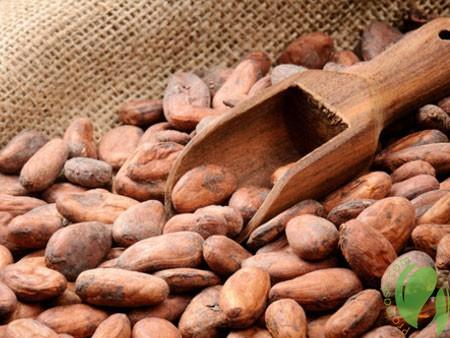 Применение натурального масла какао в косметологии